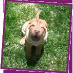 Sandra Lynn Dog Training Classes